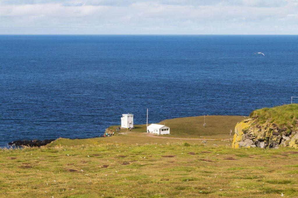 Frailecillos en Látrabjarg, en los Fiordos del Oeste de Islandia