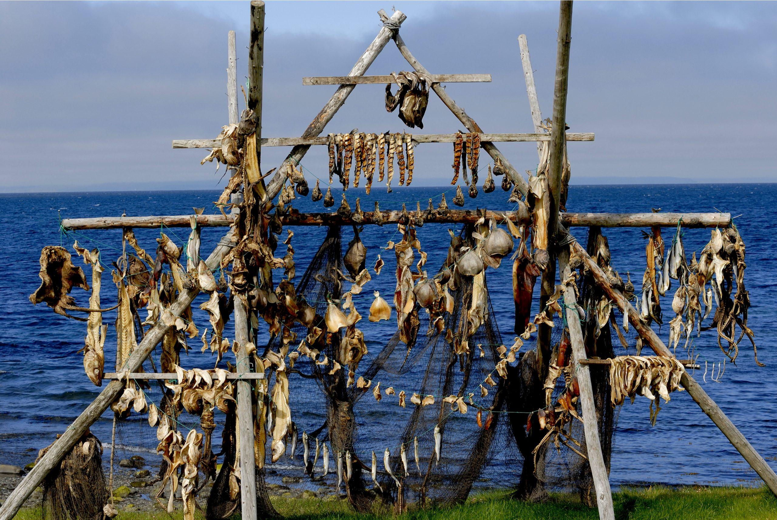 Bacalao secándose al aire libre - El bacalao y la pesca en Islandia