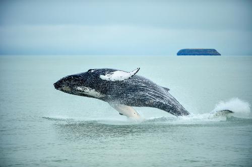 Avistamiento de ballenas en Húsavík - Circuitos Islandia: ¿Qué rutas hay por la isla?